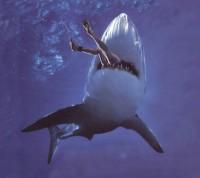 Shark Boss